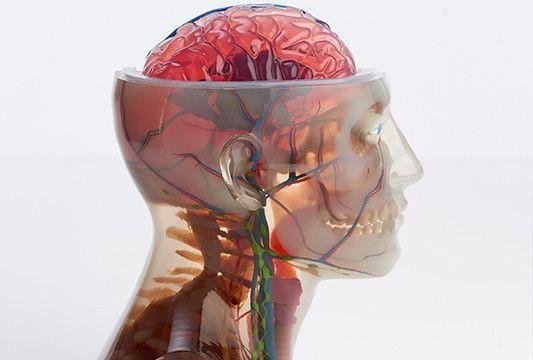 MEDICAL ANATOMIC MODEL